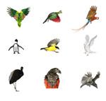 飞鸟集高清图片