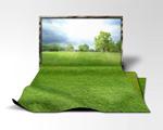 草皮高清图片