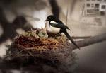 喜鹊鸟巢PSD