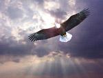 雄鹰高清图片