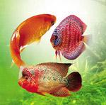 五彩斑斓深海鱼