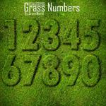 绿草创意数