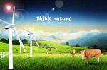 生态养殖黄牛