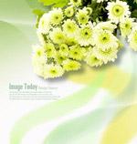 菊花花束与线条