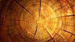 木桩年轮背景