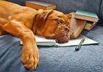 带眼镜睡觉的狗