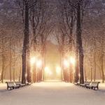 树林里的雪景