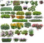 花卉盆景集合