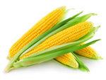 玉米高清图片