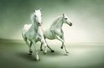 奔跑的白马