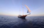 海洋轮船图片