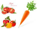 蔬菜图片矢量
