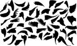 黑色翅膀设计