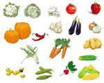 蔬菜矢量2