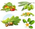 蔬菜与树枝果实