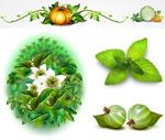 南瓜藤蔓与蔬菜
