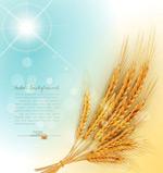 金色麦穗背景