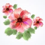 水彩手绘花