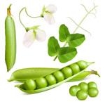 新鲜豌豆设计