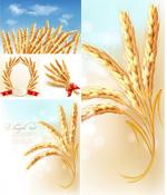小麦创意矢量