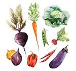 水彩蔬菜矢量