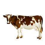 水彩棕白花奶牛