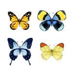 水彩蝴蝶矢量
