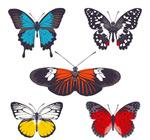 蝴蝶设计矢量