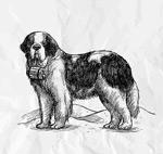 手绘圣伯纳犬