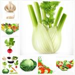 蔬菜水果矢量