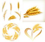 小麦矢量素材
