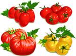 手绘水果西红柿