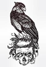雄鹰骷髅插画