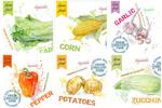 蔬菜绘画设计矢量