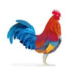 公鸡插画设计