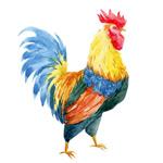 水彩绘公鸡