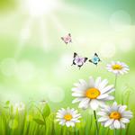 雏菊花丛和蝴蝶