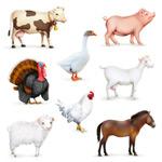 家畜与家禽矢量