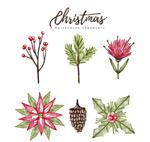 水彩绘圣诞植物