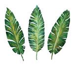 水彩植物叶子