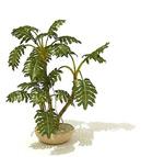 龟背竹模型
