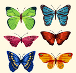 精美蝴蝶设计