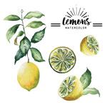 黄色柠檬矢量