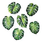 绿色龟背竹叶子
