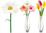 花朵与花瓶矢量