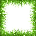 绿草空白框架背景
