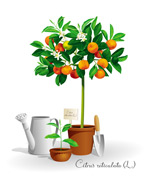 盆栽与园艺小工具
