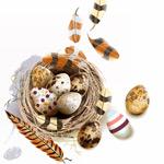 鸟窝鸟蛋和羽毛