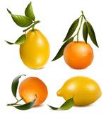 橙子和柠檬矢量
