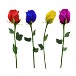 彩色玫瑰花